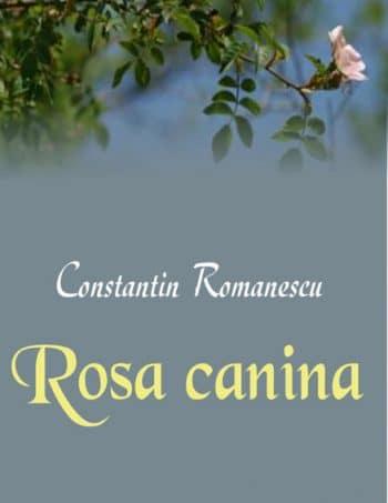 constantin_romanescu-rosa_canina